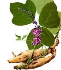 Image result for roslina kudzu
