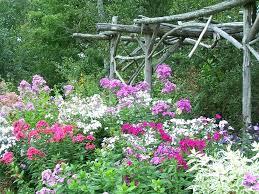 garden delights nursery image result for tall garden phlox garden delights nursery garden delights nursery