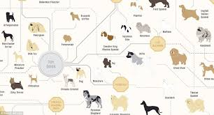 Dog Pedigree Chart The Family Tree Of Dogs Chart Reveals How Every Breeds