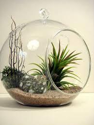 terrarium design hanging glass plant terrarium hanging glass terrarium whole hanging terrarium kit marvellous