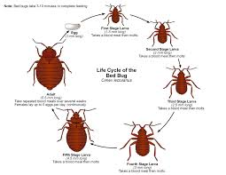 All About The Kinds Of Bedbugs That Infest Manhattan And How To Get