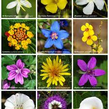 a poster with twelve flowers of diffe families