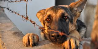 abused animals. Simple Animals Throughout Abused Animals C