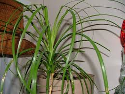 best unique common indoor plants design ideas iel renavations km