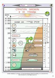 Структура биосферы Биосфера Чистая Экология Структура биосферы