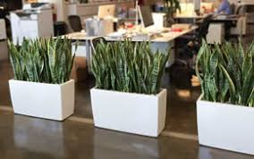office planter. real office plants planter e