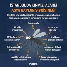 TVNET - İstanbul'da 'Asya Kaplan Sivrisineği' paniği🦟... | Face