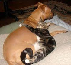 dogs and cats having babies. Exellent Cats View Animal Pictures And Videos Of Cats Dogs Raccoons Elephants  You  Name It For Dogs And Cats Having Babies B