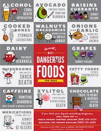 toxic foods for dogs dog allergies