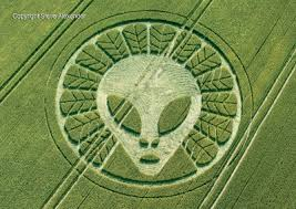 Image result for crop circle pics