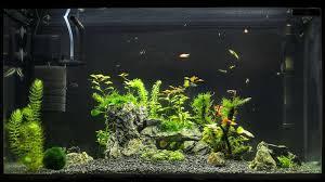 best sponge filter for aquariums in