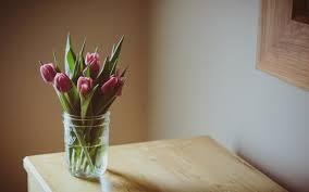 table vase. flowers pink tulips vase table q