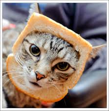 Cat Breading: Hilarious Meme via Relatably.com