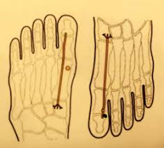 Reflexology Chart Vagus Nerve Stimulating The Vagus Nerve With Reflexology Calm Therapy
