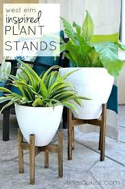 plant table indoor great gallery fresh on office tall stands uk i
