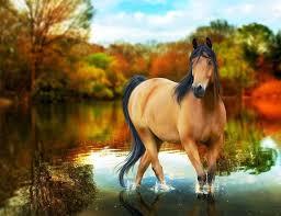 horses wallpaper hd. Wonderful Wallpaper Horse Wallpaper Hd   HD Wallpapers Desktop Free And Make This  On Horses Wallpaper Hd R
