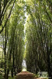 Oltre 25 fantastiche idee su piante di bambù su pinterest