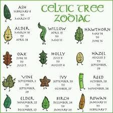 Celtic Tree Chart Celtic Tree Zodiac Celtic Tree Celtic Celtic Symbols
