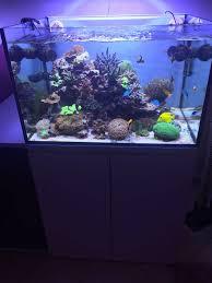 Roma] vendesi acquario completo 240 litri con attrezzatura top