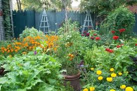 summer vegetable gardening summer vegetable garden planting plan summer vegetable garden plan summer vegetable gardening