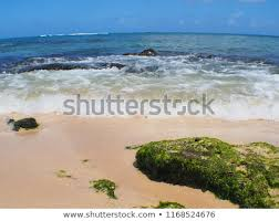 Laniakea Beach Oahu Hawaii Stock Photo Edit Now 1168524676