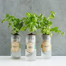 kitchen essentials herb planter