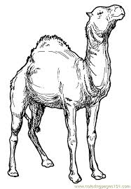 Small Picture Camel Coloring Page 006 Coloring Page Free Camel Coloring Pages