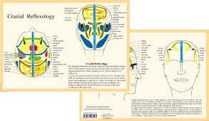 Cranial Reflexology Chart Cranial Reflexology A4