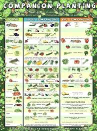 Vegetable Companion Planting Charts Vegetable Garden Planting Calendar Tecnodefinitions Club