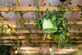 how to hang plants from a ceiling