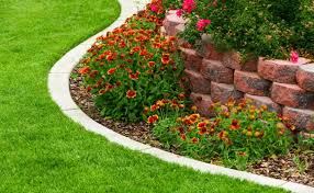 edging plants or border plants for