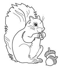 Small Picture Geography Blog Grey Squirrel Coloring Page