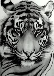 Beautiful Tiger Tat Portréty Velké Kočky Tetování A Divoká Zvířata