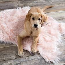 backed with vegan leather this pink faux sheepskin rug by north end décor will add a perfect touch of class to any room the brand notes when you re
