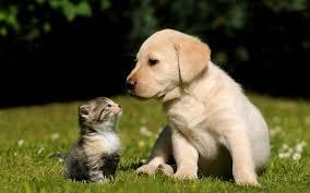 dogs and cats wallpaper. Modren Wallpaper Free Cute Dog And Cat Wallpaper HD To Dogs And Cats N
