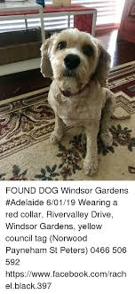 facebook memes and black found dog windsor gardens adelaide 6 01