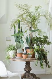 Living  Living Room Plants  F Living Room Plants Nice Living - Easy living room ideas