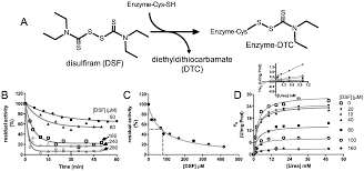 Disulfiram Reaction Molecules Free Full Text Inhibition Of Urease By Disulfiram An