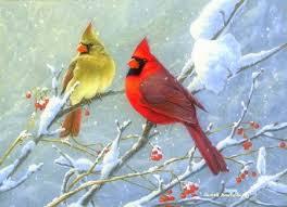 winter cardinal wallpaper. Wonderful Winter Winter Cardinals With Cardinal Wallpaper C