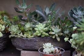 小さな手作りガーデン | 鉢植え, 植物栽培, ガーデニング