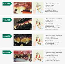 Dental Grading Chart Greencross Vets