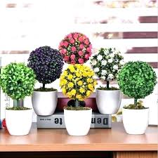Small plant for office desk Office Cabin Small Plants For Office Small Desk Plants Office Desk Plants Perfect Office Good Small Plants For Small Plants For Office Ingamersinfo Small Plants For Office Small Office Plants Low Light Small Indoor