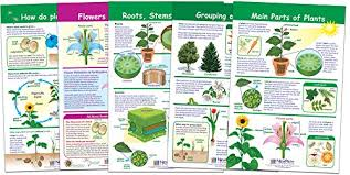 Plant Chart Newpath Learning 94 3501 All About Plants Bulletin Board Chart Set Pack Of 5