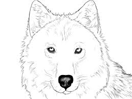 Drawn Wolf Wolf Head Drawing How To Draw A Wolf Head And Shoulders Knees And