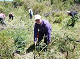 Which days are volunteers required? Wildlife Volunteer Projects In South Africa Volunteering Solutions