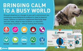 Zylkene Dose Chart Vetoquinol Zylkene Behavior Support Capsules For Dogs Cats 225mg Calming Natural Milk Protein Supplement Help Pets Cope With Change