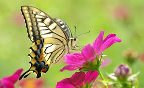 real beautiful colorful butterflies. Perfect Real Macrobutterflybutterflybeautifulbeautycolorfulyellowflower Intended Real Beautiful Colorful Butterflies R