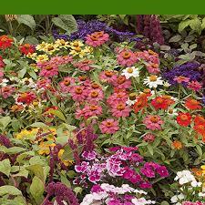 adding summer color to your garden