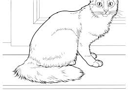 Free Printable Warrior Cat Coloring Pages Printable Warrior Cat