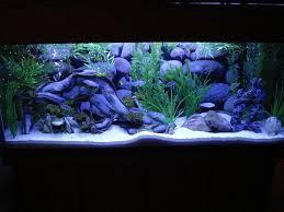 fish tank lighting ideas. Gallon Fish Tank Ideas Lighting T